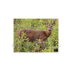 Maximal 54 x 80 Roe Deer Alert