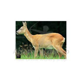 Maximal 60 x 80 Deer