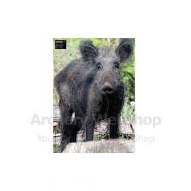 Maximal 50 x 70 Wild Boar