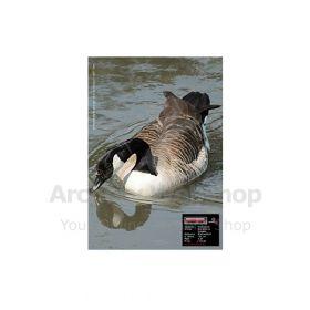 Maximal 30 x 40 Canadian Goose