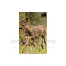 Maximal 40 x 60 Roe Deer Smal