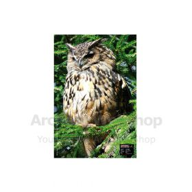 Maximal 40 x 60 Owl