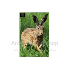 Maximal 40 x 60 Hare