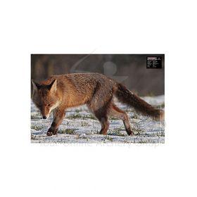 Maximal 40 x 60 Fox